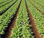 農業向け空調服